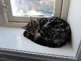 Image: Back home, the cat is slacking on the window sill.